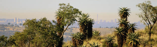 Johannesburg skyline from the beautifully rocky Hoogland hills, peace, healing and wellness only a short distance away